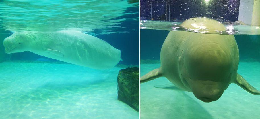 Lotte World Aquarium